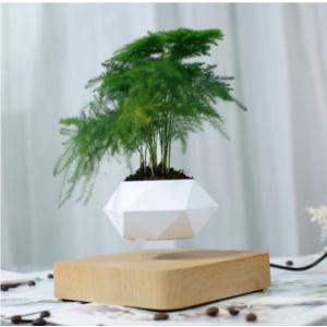Levitating bonsai
